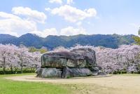 日本の桜風景 石舞台古墳 10737000381| 写真素材・ストックフォト・画像・イラスト素材|アマナイメージズ