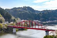 月ヶ瀬湖畔の桜と月瀬橋 10737000389| 写真素材・ストックフォト・画像・イラスト素材|アマナイメージズ