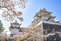 桜咲く伊賀上野城 10737000414| 写真素材・ストックフォト・画像・イラスト素材|アマナイメージズ