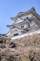 伊賀上野城と桜(タテ写真) 10737000415| 写真素材・ストックフォト・画像・イラスト素材|アマナイメージズ