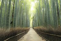 5月,新緑の竹林の道-京都嵯峨野の散策スポット