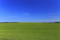 7月 北海道 根釧台地の青空と緑の草原