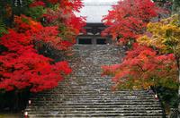 11月 紅葉の神護寺 京都の秋景色 10738002151| 写真素材・ストックフォト・画像・イラスト素材|アマナイメージズ