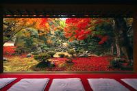 11月 紅葉の徳源院 近江の秋景色 10738002157| 写真素材・ストックフォト・画像・イラスト素材|アマナイメージズ