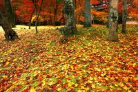 11月 紅葉の永観堂 京都の秋景色 10738002163| 写真素材・ストックフォト・画像・イラスト素材|アマナイメージズ