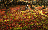 11月 紅葉の祇王寺-京都嵯峨野- 10738002167| 写真素材・ストックフォト・画像・イラスト素材|アマナイメージズ