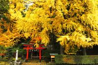 11月 岩戸落葉神社 京都の秋景色 10738002184| 写真素材・ストックフォト・画像・イラスト素材|アマナイメージズ