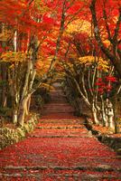 11月 紅葉の鶏足寺参道  滋賀の秋景色 10738002191| 写真素材・ストックフォト・画像・イラスト素材|アマナイメージズ
