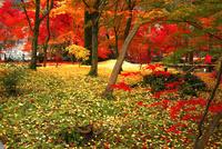 11月 紅葉の永観堂 京都の秋景色 10738002197| 写真素材・ストックフォト・画像・イラスト素材|アマナイメージズ