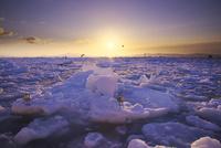 日の出と流氷と国後島