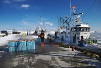 尾岱沼漁港のホタテの荷揚げ 10740002783| 写真素材・ストックフォト・画像・イラスト素材|アマナイメージズ