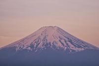 薄紅色に染まった早朝の富士山