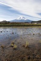 富士吉田市農村公園よりのぞむ収穫後の田んぼと富士山