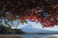 河口湖畔より望む紅葉と富士山