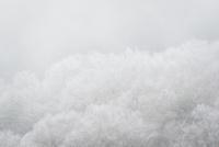 靄に霞む霧氷の着いた木々
