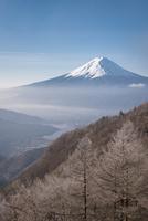 御坂山より望む霧氷のついた山林越しの富士山 10743000171| 写真素材・ストックフォト・画像・イラスト素材|アマナイメージズ