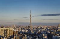 文京シビックセンターより望む東京スカイツリー 10743000197| 写真素材・ストックフォト・画像・イラスト素材|アマナイメージズ