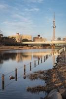 旧中川より望む東京スカイツリー 10743000221| 写真素材・ストックフォト・画像・イラスト素材|アマナイメージズ