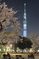 錦糸公園より望む夜桜と東京スカイツリー 10743000224| 写真素材・ストックフォト・画像・イラスト素材|アマナイメージズ