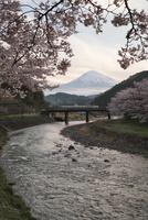 稲瀬川より望む桜と富士山 10743000245| 写真素材・ストックフォト・画像・イラスト素材|アマナイメージズ