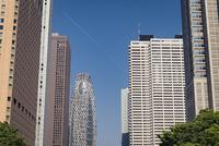 新宿中央公園より望む新宿の高層ビル群 10743000253| 写真素材・ストックフォト・画像・イラスト素材|アマナイメージズ