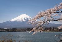 河口湖より望む富士山と桜 10743000259| 写真素材・ストックフォト・画像・イラスト素材|アマナイメージズ
