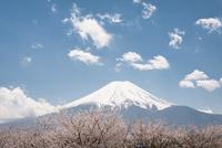 桜と富士山 10743000318| 写真素材・ストックフォト・画像・イラスト素材|アマナイメージズ