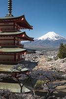 新倉山浅間公園より望む桜と五重塔越しの富士山 10743000354| 写真素材・ストックフォト・画像・イラスト素材|アマナイメージズ