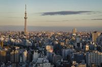文京シビックセンター展望ラウンジより望む東京スカイツリー 10743000384| 写真素材・ストックフォト・画像・イラスト素材|アマナイメージズ