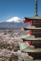 新倉山浅間公園より望む五重塔越しの富士山市 10743000394| 写真素材・ストックフォト・画像・イラスト素材|アマナイメージズ