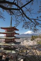 新倉山浅間公園より望む五重塔越しの富士山市 10743000395| 写真素材・ストックフォト・画像・イラスト素材|アマナイメージズ