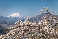 岩殿山より望む満開の桜越しの富士山 10743000407| 写真素材・ストックフォト・画像・イラスト素材|アマナイメージズ