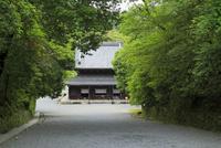 参道から見る仏殿