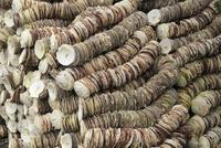 帆立貝の貝殻 10763001075  写真素材・ストックフォト・画像・イラスト素材 アマナイメージズ