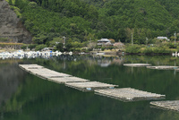 カキの筏式垂下養殖 10763001100| 写真素材・ストックフォト・画像・イラスト素材|アマナイメージズ