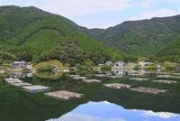 カキの筏式垂下養殖風景