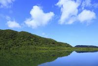 沖縄・西表島 マングローブ林と浦内川