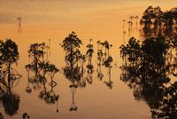 沖縄・石垣島 名蔵湾のマングローブ林と夕焼けに染まる海