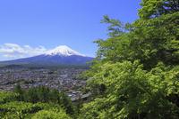 浅間公園から望む富士山と町並み