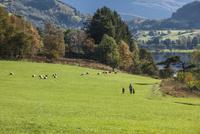 牧草地を手をつないで歩く親子(ヨコ) 10770000008| 写真素材・ストックフォト・画像・イラスト素材|アマナイメージズ