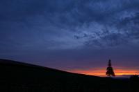 夕焼けとクリスマスツリーの木 10770000042| 写真素材・ストックフォト・画像・イラスト素材|アマナイメージズ