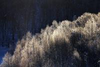 霧氷のついた木々 10770000109| 写真素材・ストックフォト・画像・イラスト素材|アマナイメージズ