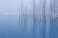 初雪の青い池 10770000112| 写真素材・ストックフォト・画像・イラスト素材|アマナイメージズ