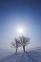 太陽と二本の木 10770000115| 写真素材・ストックフォト・画像・イラスト素材|アマナイメージズ