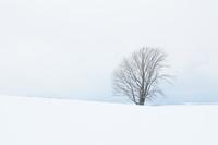雪のつもった丘に立つ哲学の木 10770000140| 写真素材・ストックフォト・画像・イラスト素材|アマナイメージズ