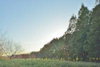 夕闇迫る森
