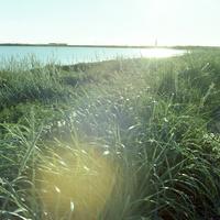 アイスランドの海岸へ続く草原の中に降り注ぐ光