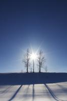 家族の木 10770000229| 写真素材・ストックフォト・画像・イラスト素材|アマナイメージズ