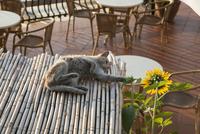 ラヴェッロのあるカフェの屋根で遊ぶネコ