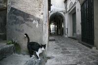 ラヴェッロの町を散歩するネコ